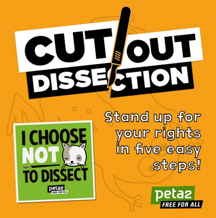 cut out dissection