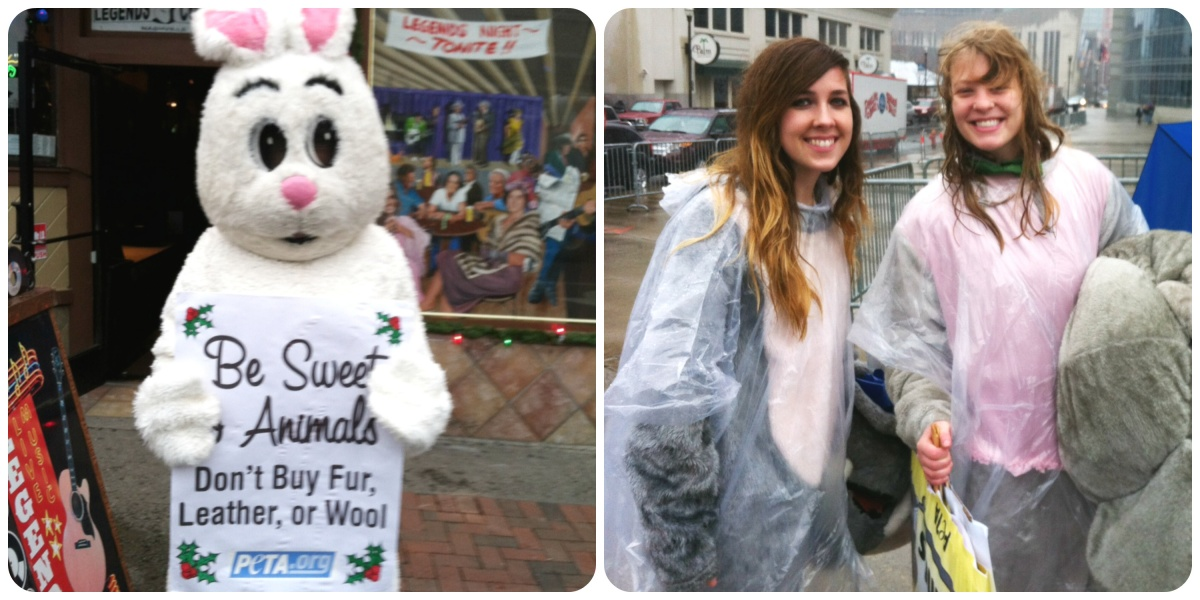 animal rights protests