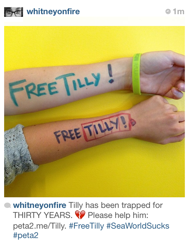 free tilly mission peta2