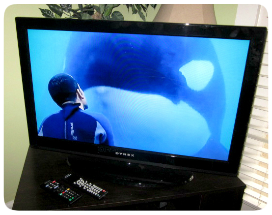Blackfish CNN airing
