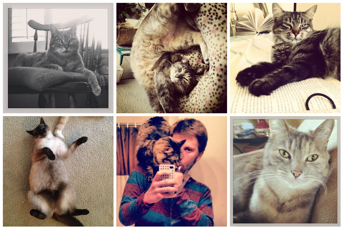 cats instagram collage