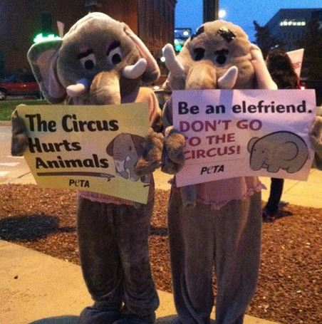 ringling protest