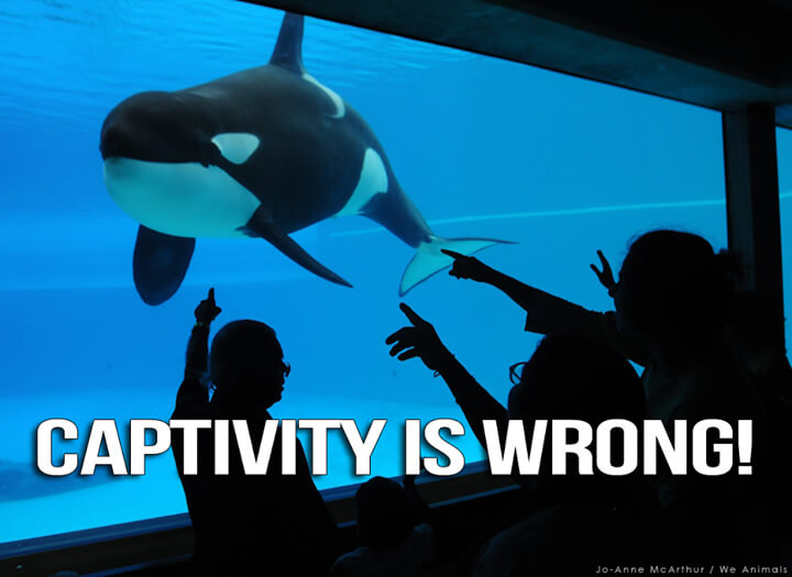 SeaWorld captivity orcas