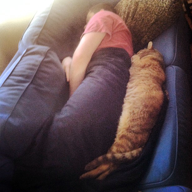 cat spooning on couch