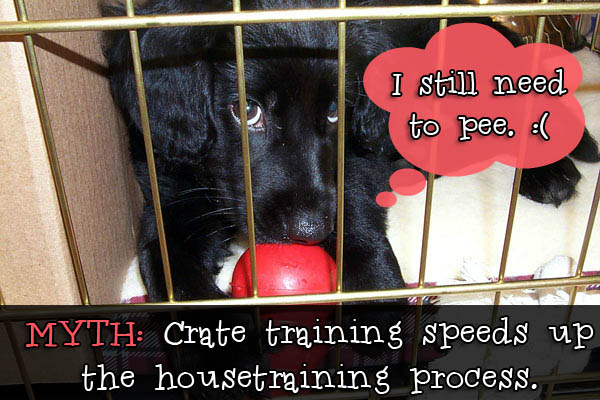 dog in crate myth