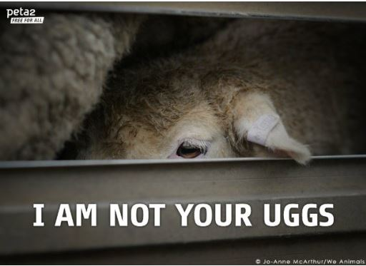 this is why uggs are ugly photo