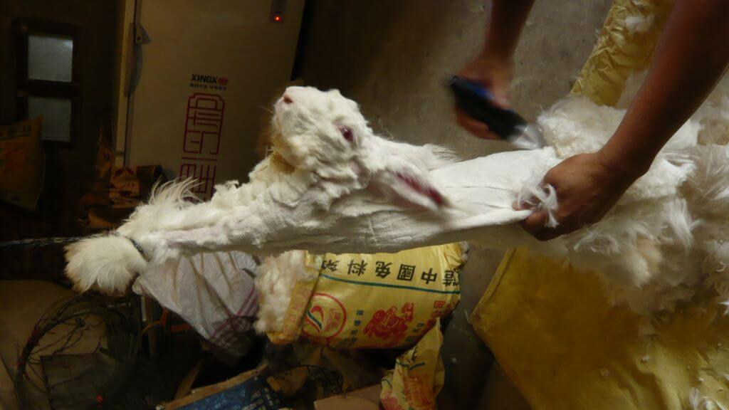 angora rabbit fur cutting