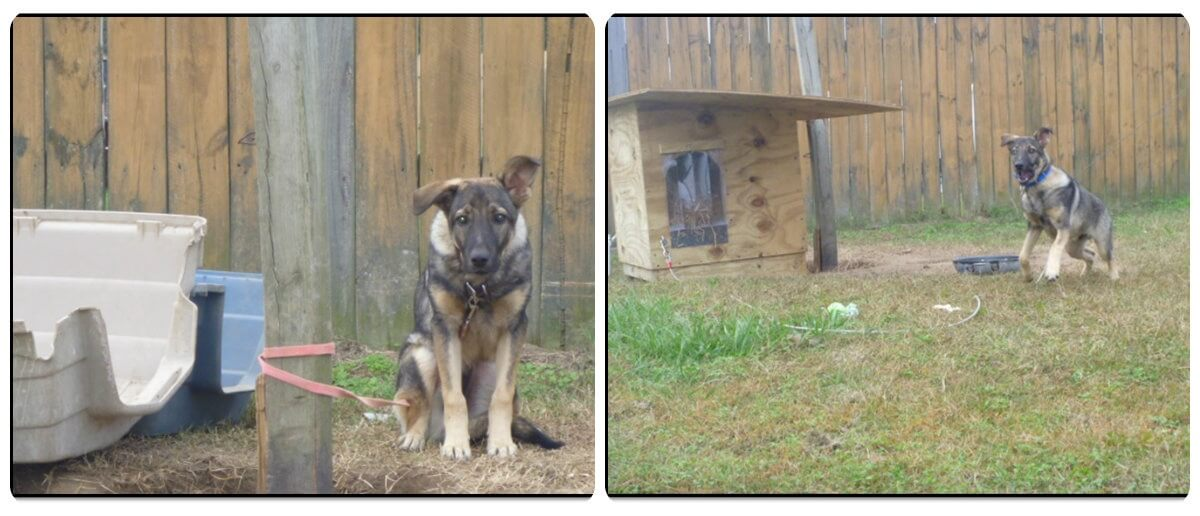peta community animal project free dog house Bentley before after photo