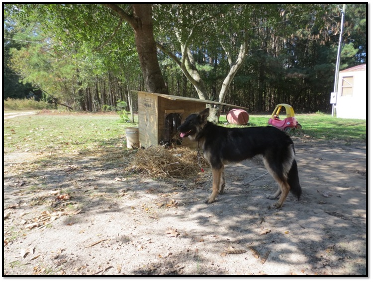 peta community animal project dog house before after picture