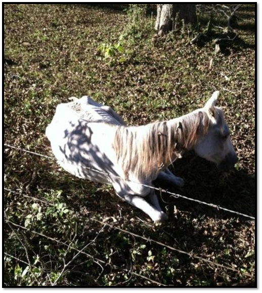 peta cruelty investigation department starved horse animal cruelty