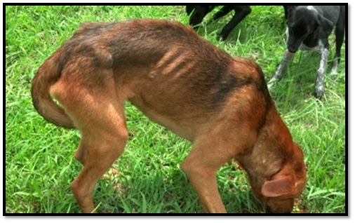 peta cruelty investigation department emaciated dog seized rescue animal abuse