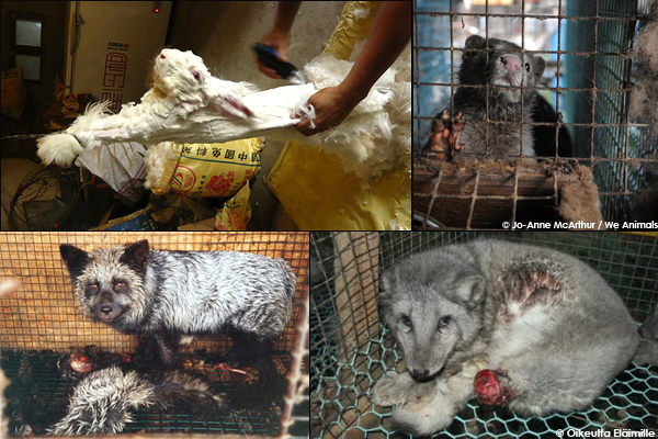 animals killed for fur collage