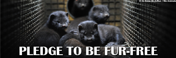 fur free pledge button mink