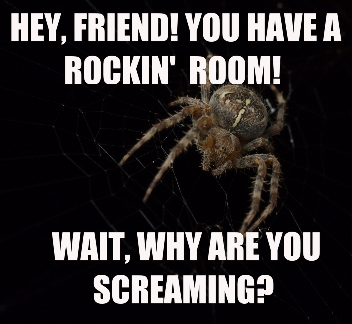 HEY FRIEND NEW 5 reasons spiders aren't that scary peta2