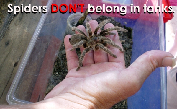 Spiders Don't Belong In Tanks