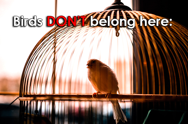 animals should not be kept in cages essay