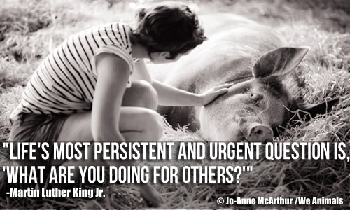 mlk quote what are you doing for others