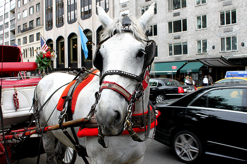 Nyc carriage horse central park