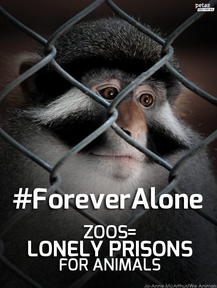 we animals forever alone peta2
