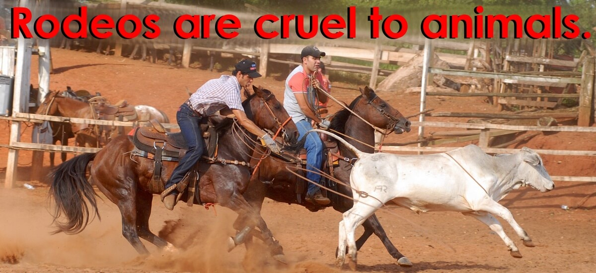 Image result for rodeos are cruel