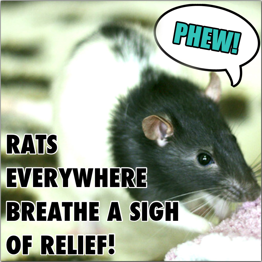 rats-everywhere-breathe-sigh-relief.