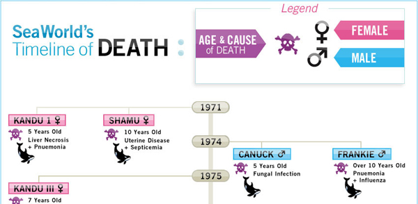 Lives Stolen from SeaWorld infographic preview