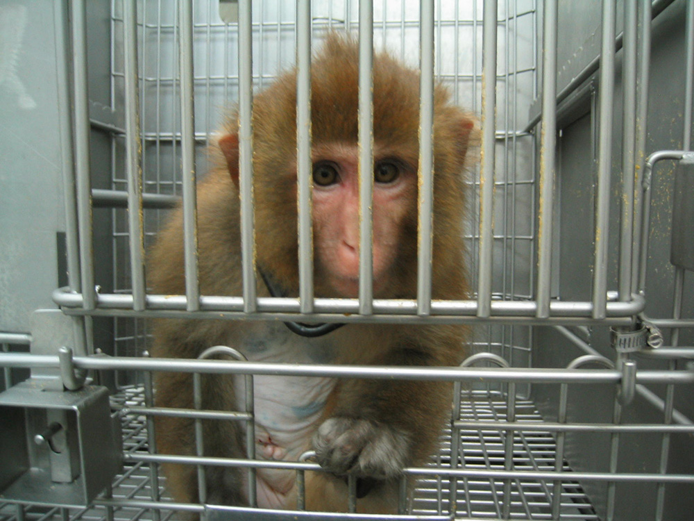 1. monkey in cage