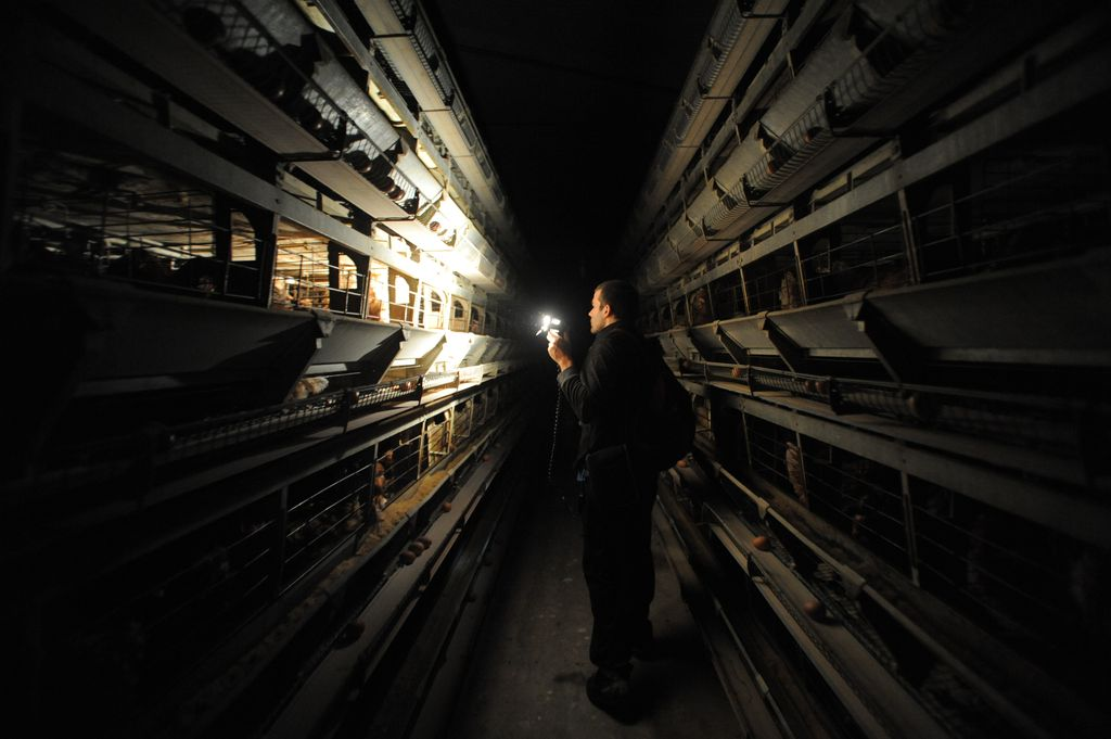 12. We Animals Battery Cages
