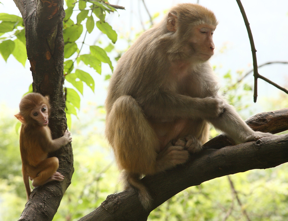 2. monkey and baby in tree