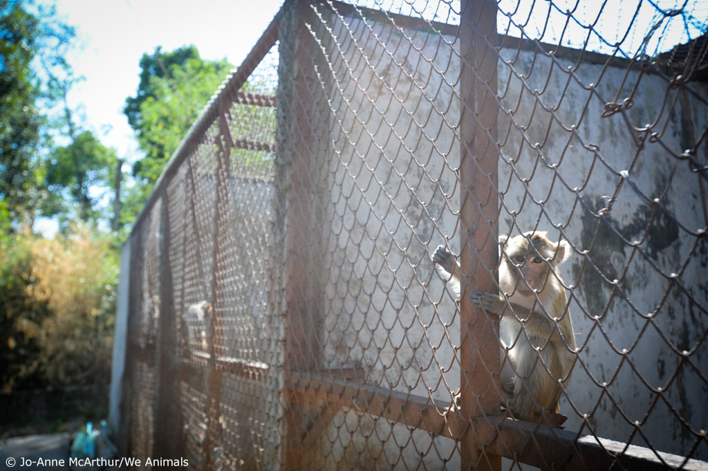 3. monkey in large cage