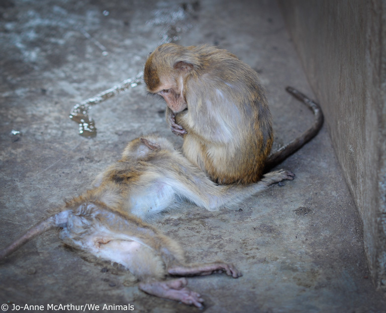 6. sad dead monkey in cage