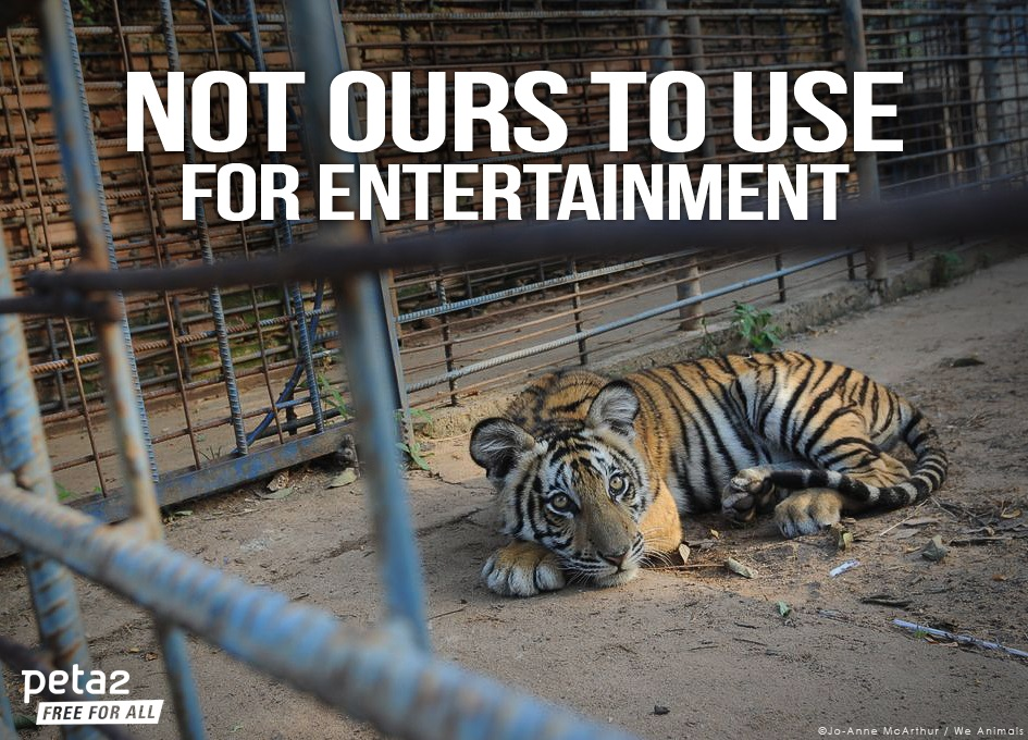 why should animals not be in zoos
