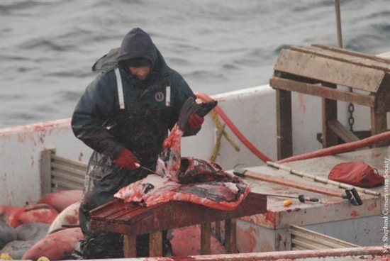 Seal Slaugher 10
