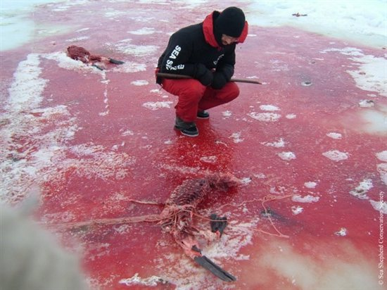 Seal Slaugher 9