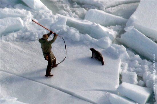 Seal Slaughter 2
