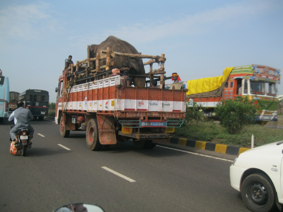 Sunder on the road2