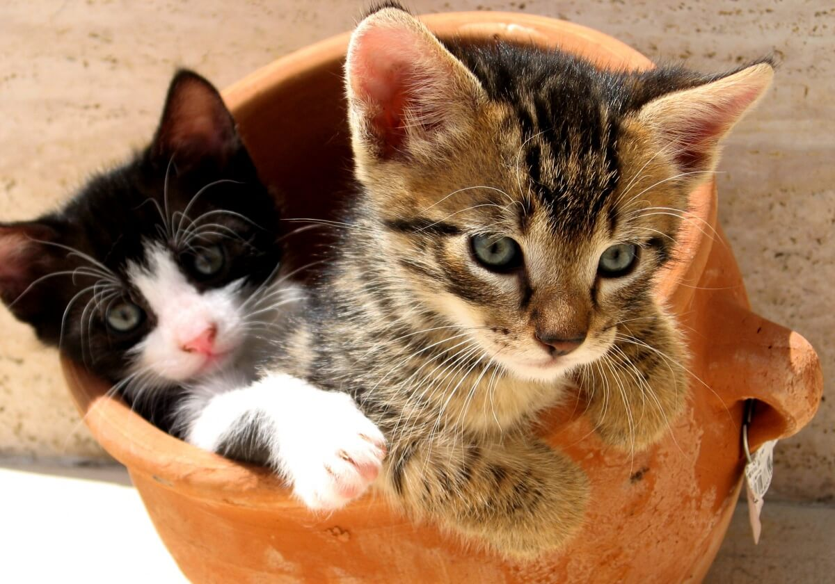 d86b5a7ef4652 Animals from shelters have bigger ♥s! cute kitten cats playful funny