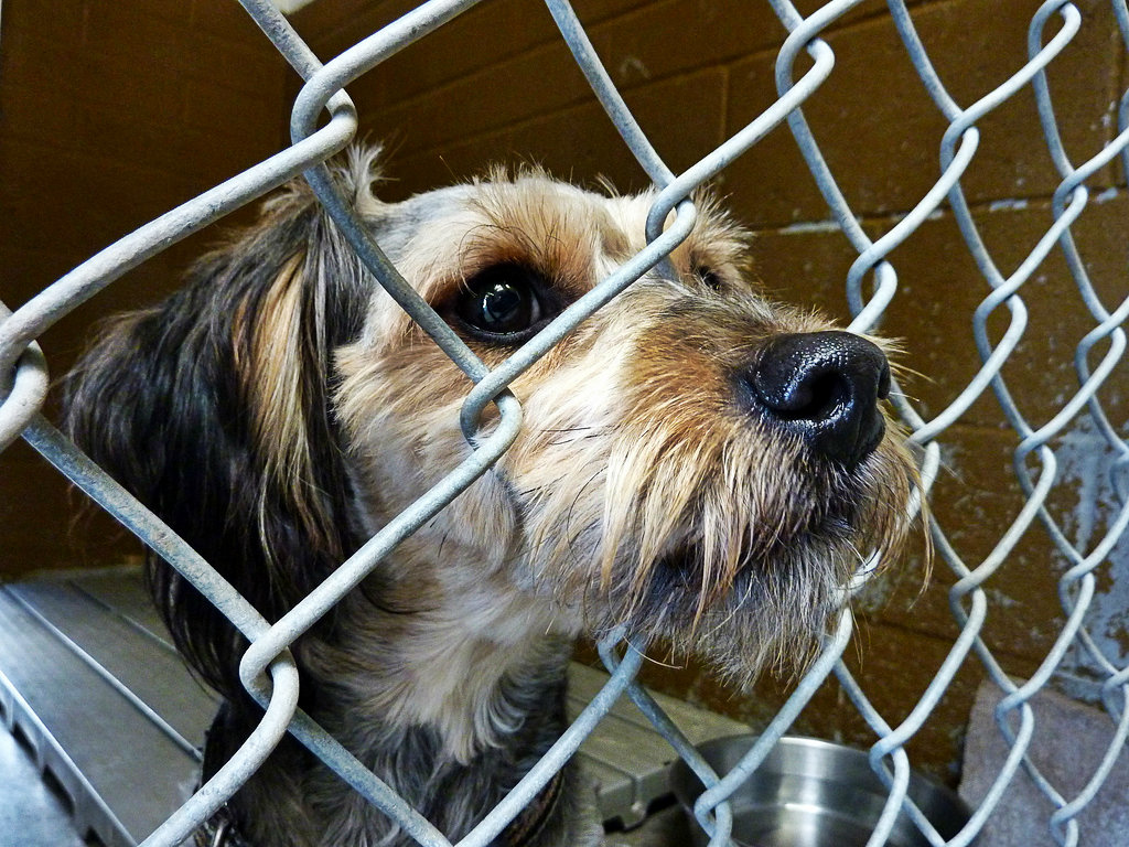 dog shelter sad