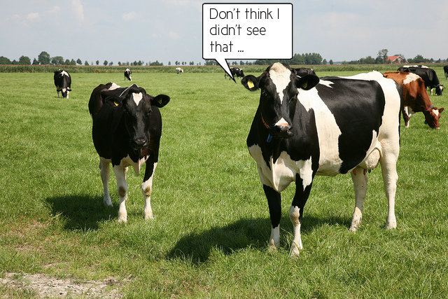 cow in field with caption