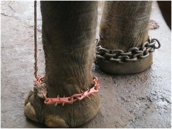 Sunder chained feet