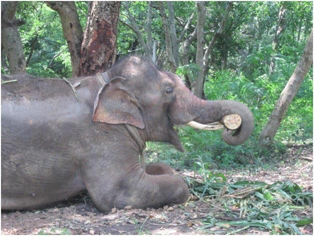 Sunder is already making himself at home at the elephant sanctuary, where he will soon join a herd of 13 elephant friends!