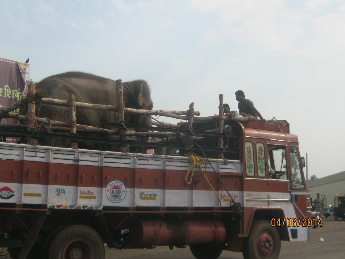 Sunder on the road1