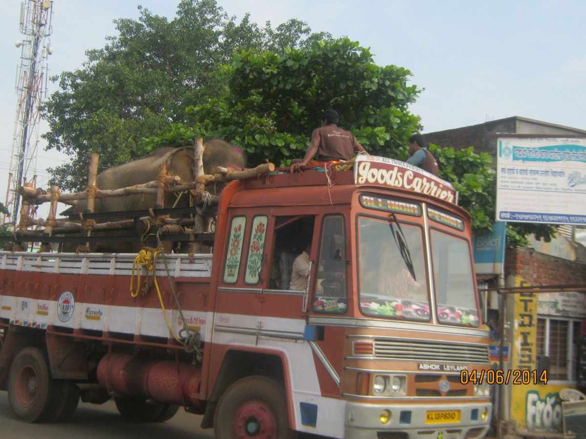 Sunder on the road3