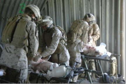pig military training exercise pigs 3
