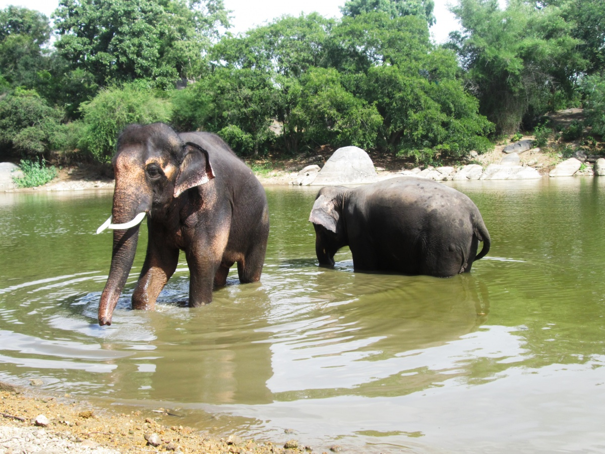 sunder-enjoying-bath-with-lakshmi