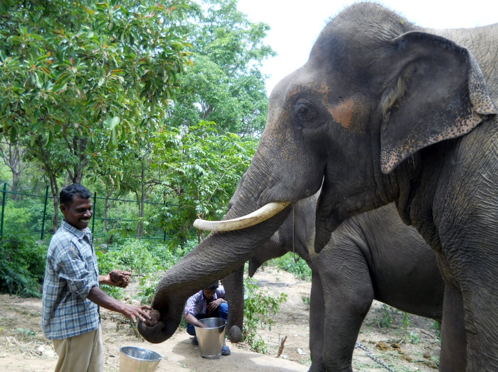 Sunder's caretaker gives him a coconut.