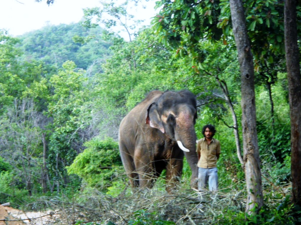 Sunder takes a walk through the park with his caretaker.