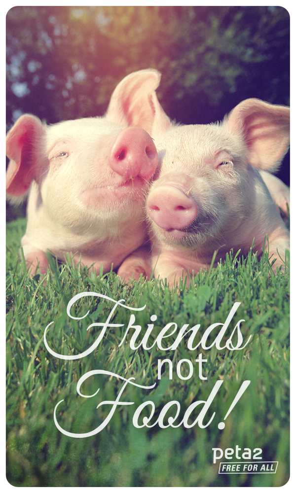 Friends not Food wallpaper