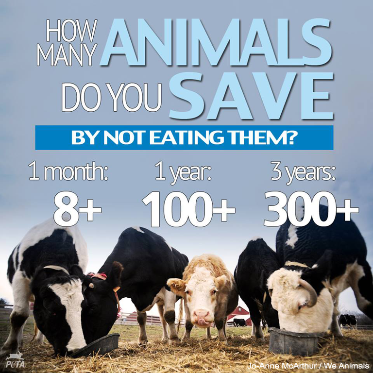 Save animals cows