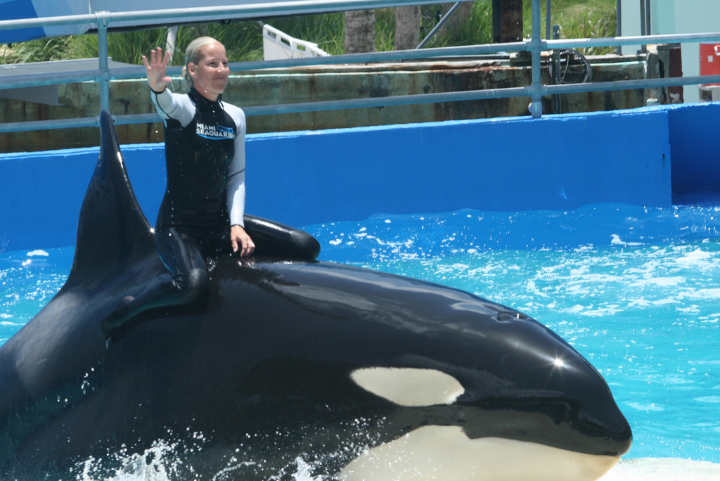 lolita whale trainer riding